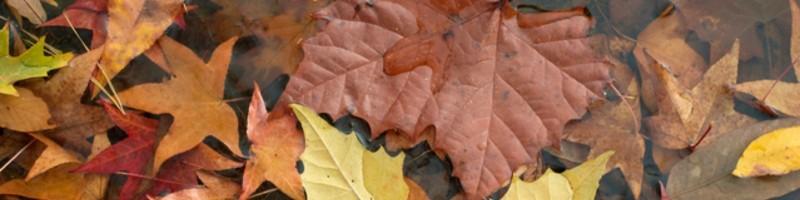 autumn flotilla